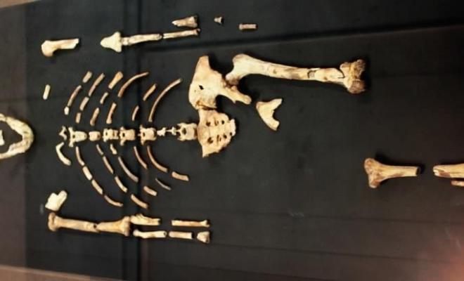 Un os de babouin dans le squelette de Lucy !