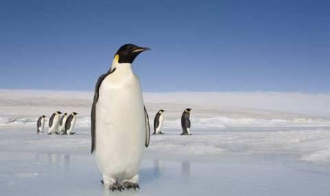 L'Antarctique est le foyer de plusieurs pingouins.