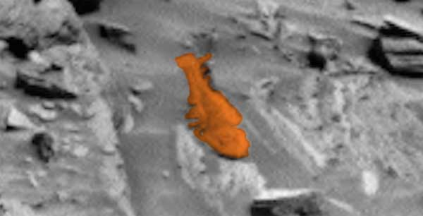 Un deuxième poisson découvert sur Mars en un mois