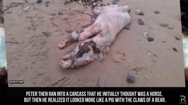 Les créatures les plus étranges jamais trouvées échouées sur une plage