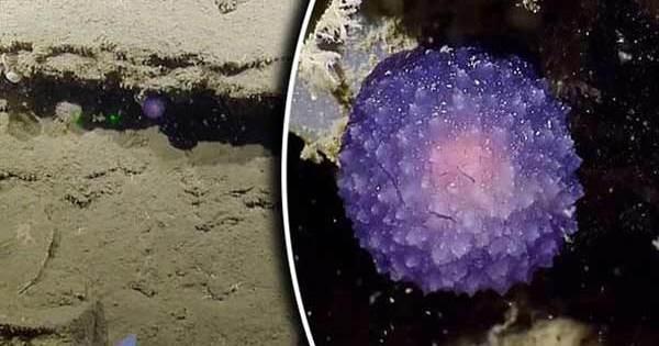 Un étrange « oeuf extraterrestre » découvert au fond de l'Océan