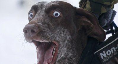 Il fait passer son chien pour un bélier pour tromper le fisc