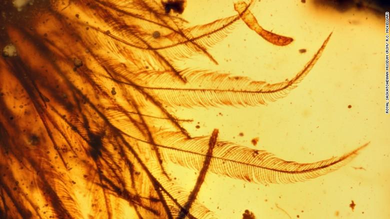 L'ambre ajoute une preuve fossile que de nombreux dinosaures arboraient des plumes plutôt que des écailles.