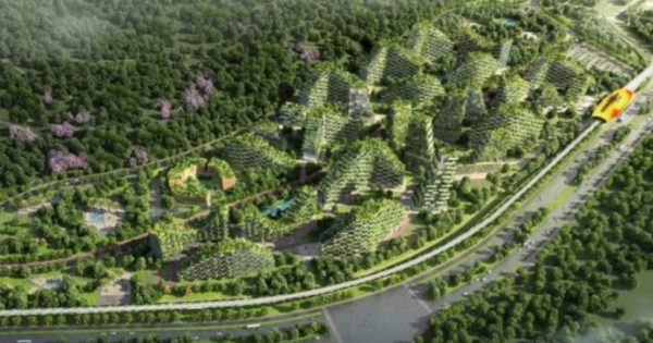 La Chine commence à construire la première ville « forestière » du monde