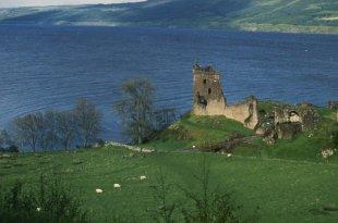 Le mystère de Nessie: le monstre du Loch Ness a-t-il une famille ?