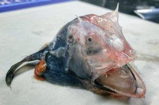 Découverte d'une horrible bestiole marine à cornes née de la pollution humaine ?