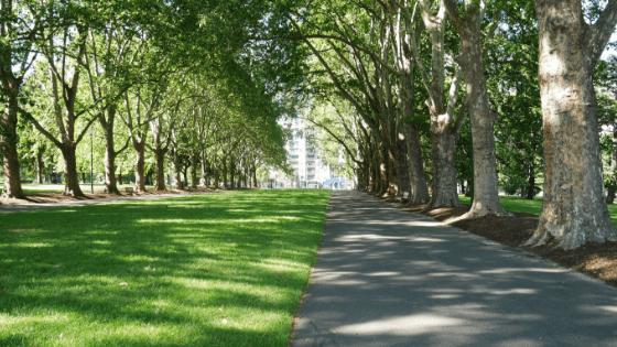 ONU: árvores podem reduzir consumo de combustíveis fósseis nas cidades