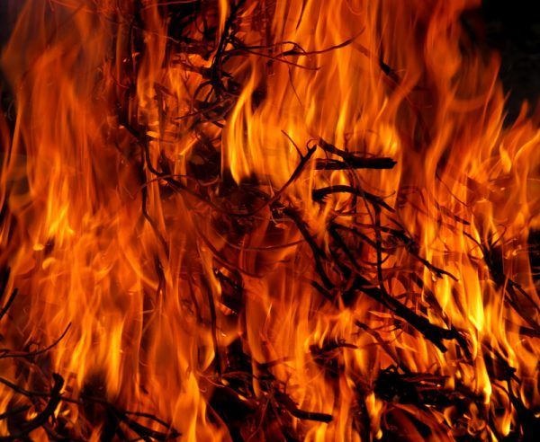 ONU pede empenho contra incêndios florestais