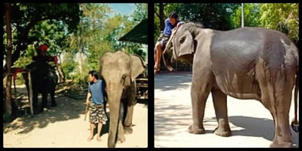 Elephant Village Hua Hin Thailand