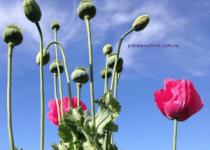 Medicamentos A Base De Opio