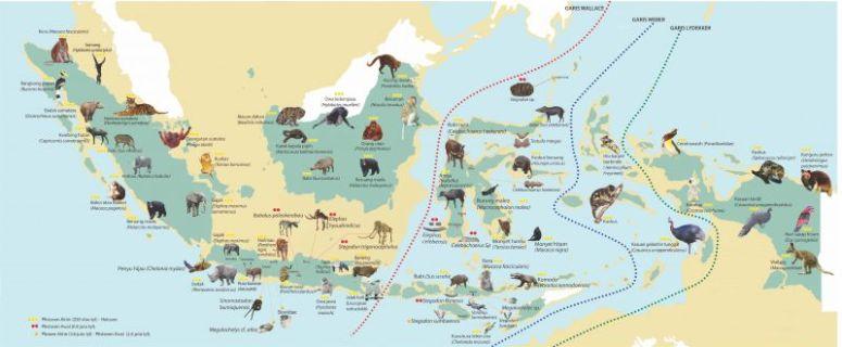 penyebaran fauna di indonesia