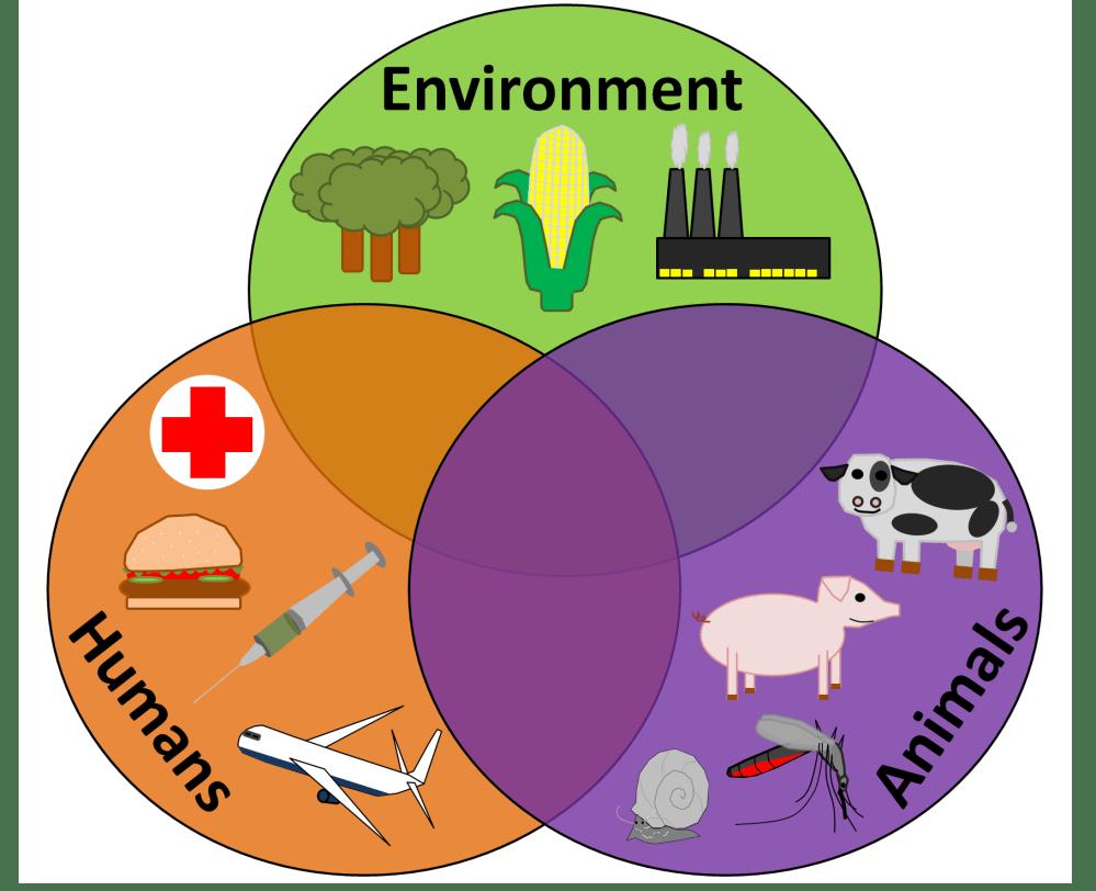 medium resolution of the disease triangle and the one health concept parasite venn diagram animal plant bacterial cells bacteria protist venn diagram