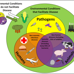 Influenza Venn Diagram Hpm Light Batten Wiring The Disease Triangle And One Health Concept Parasite