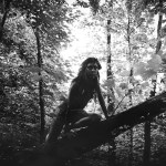 Irene Gittarelli (classe 1991 - Accademia Albertina di Torino), Code of the Forest #5, tiratura III, 2015, fotografia su stampa Fine Art, 30x40 cm