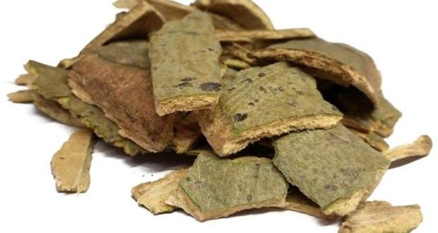 Кора осины - рецепты приготовления и лечебные свойства
