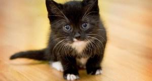 Глисты у котенка: Симптомы, признаки и лечение