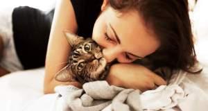 Нематоды у кошек - симптомы, признаки и общие методы лечения