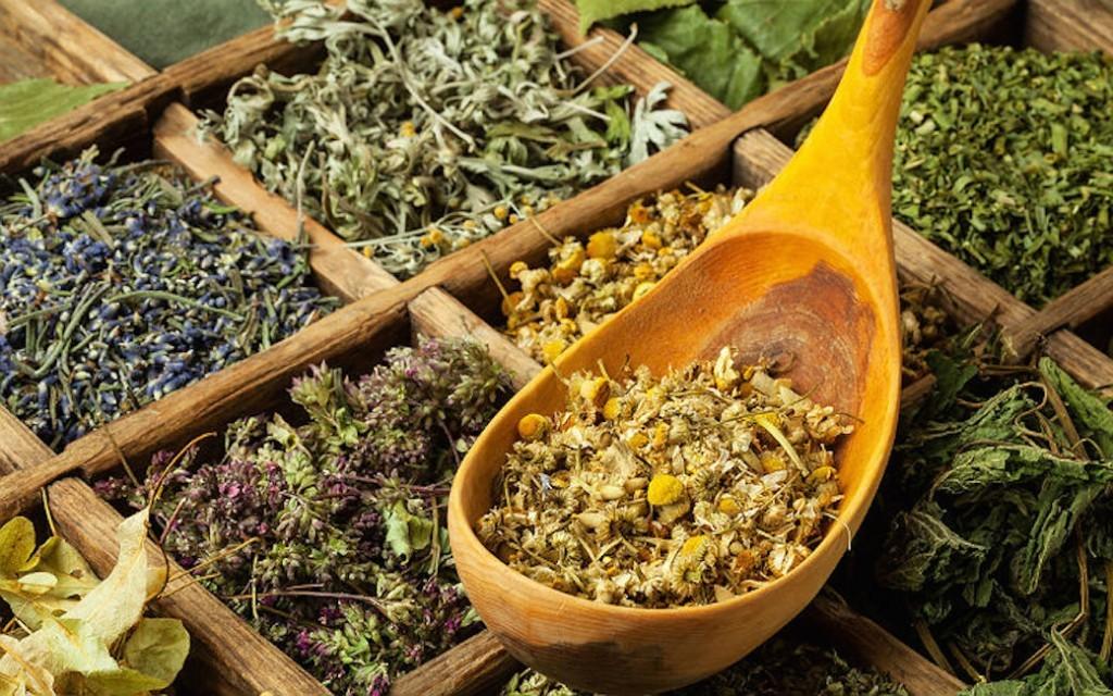 Противопаразитарные травы для человека
