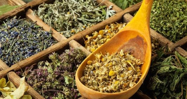 Антипаразитарные травы - применение и рецепты