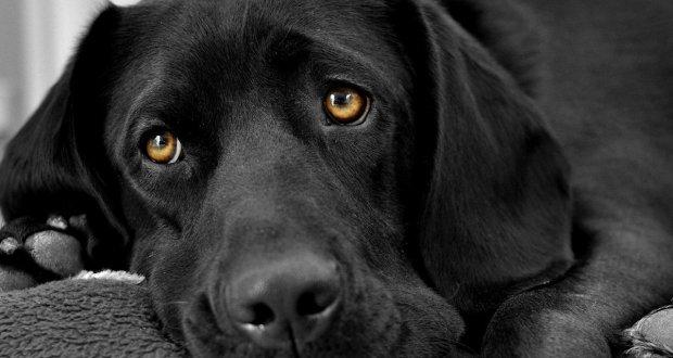 Глисты у собак: симптомы, признаки, профилактика