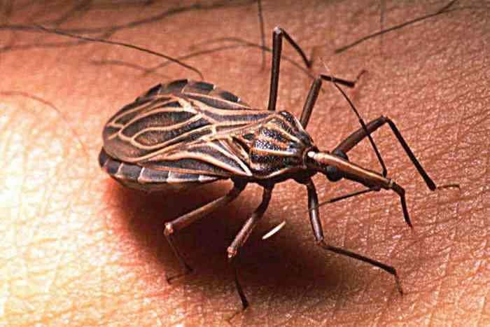 Новое насекомое убийца в Индии: смертельный жук или очередной фейк?