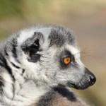 Zoo de Champrerus