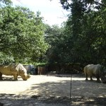 Zoo African Safari Plaisance du Touch