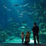 Aquarium Mare-Nostrum