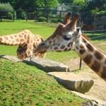 Zoo de Pont-Scorff