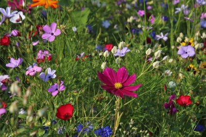 photo de fleurs sauvages wildflowers, meadow, grass