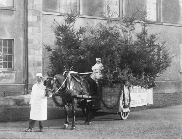 Sepia photograph of a worker on a horse and cart containing Christmas trees