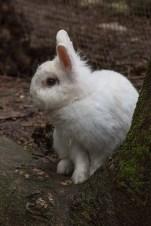 coniglietto bianco albero