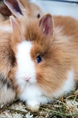 coniglietto bianco e beige bellina
