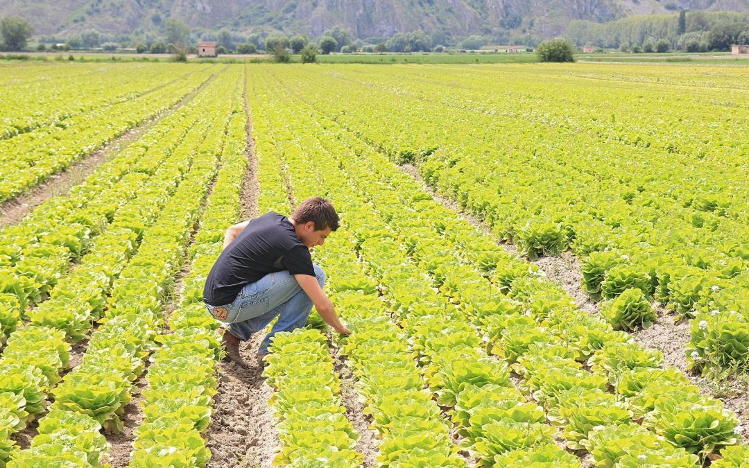 12 gennaio – Incontro di presentazione dei corsi per agricoltori