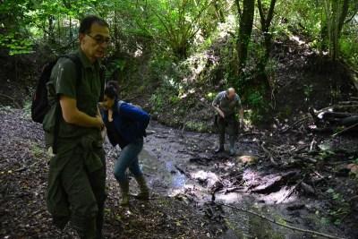 Campagna monitoraggio Salamandrina e Moscardino