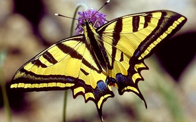 24-25 giugno – Le farfalle del Parco