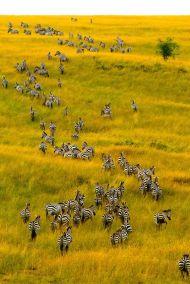 Observation des zèbres au Kenya - Photo Pinterest