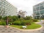 Day 62 - Rooftop garden.