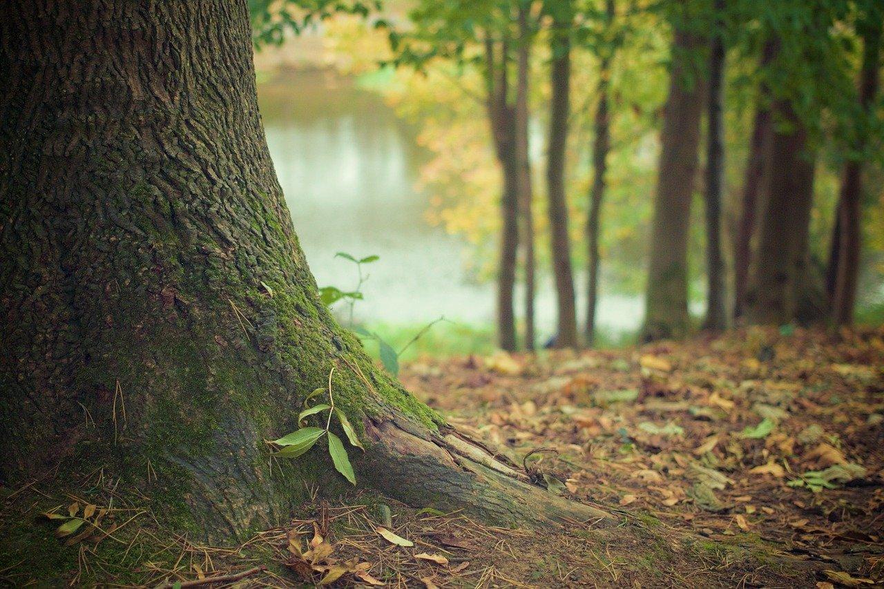Un arbre et des racines