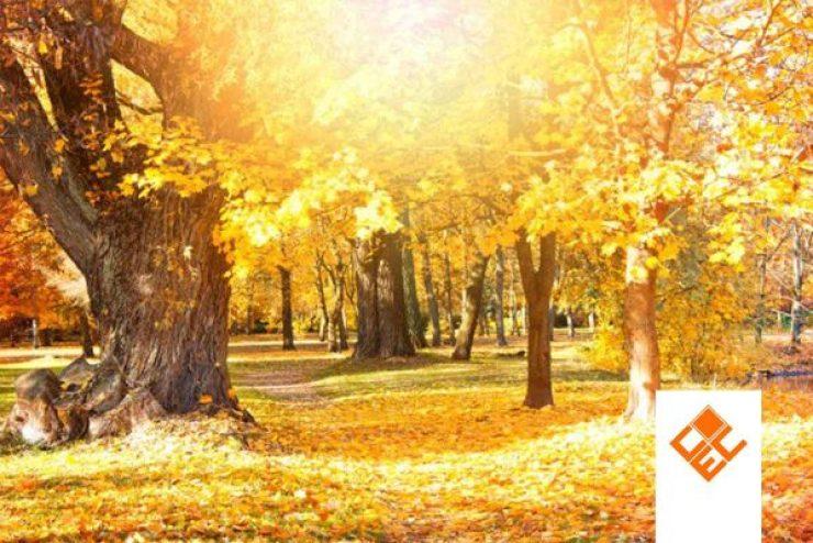 4 Musim di Eropa dalam Bahasa Inggris dan terjemahan. Ilustrasi Musim Gugur Autumn / Fall