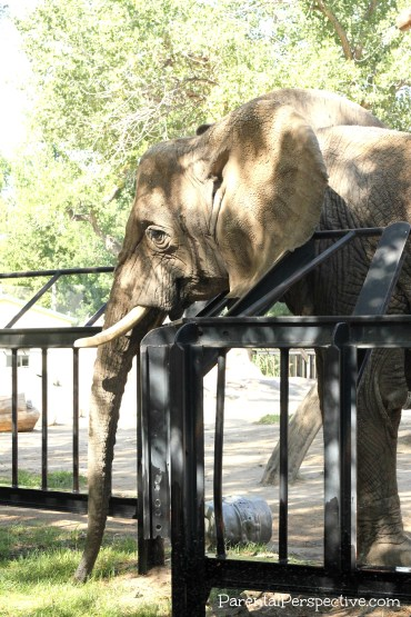 A visit to the Lee Richardson Zoo in Garden City, Kansas