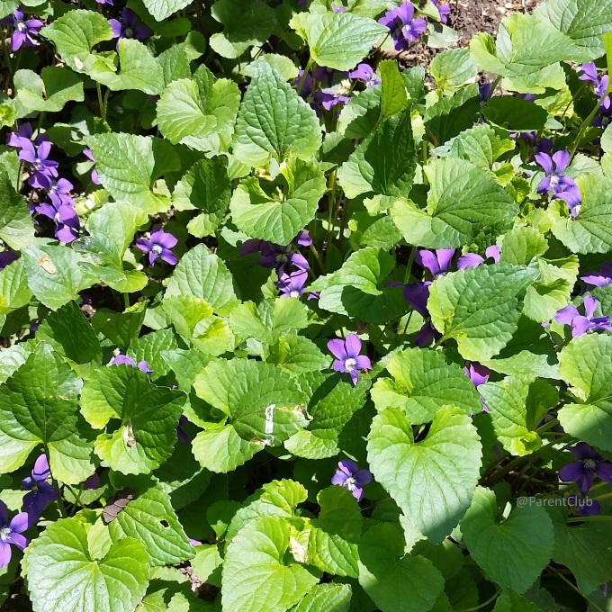 backyard, summer, green, flowers, outside