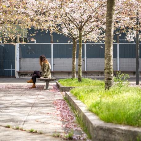dimanche-mars-printemps-fleurs-3