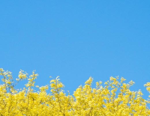 photo minimaliste