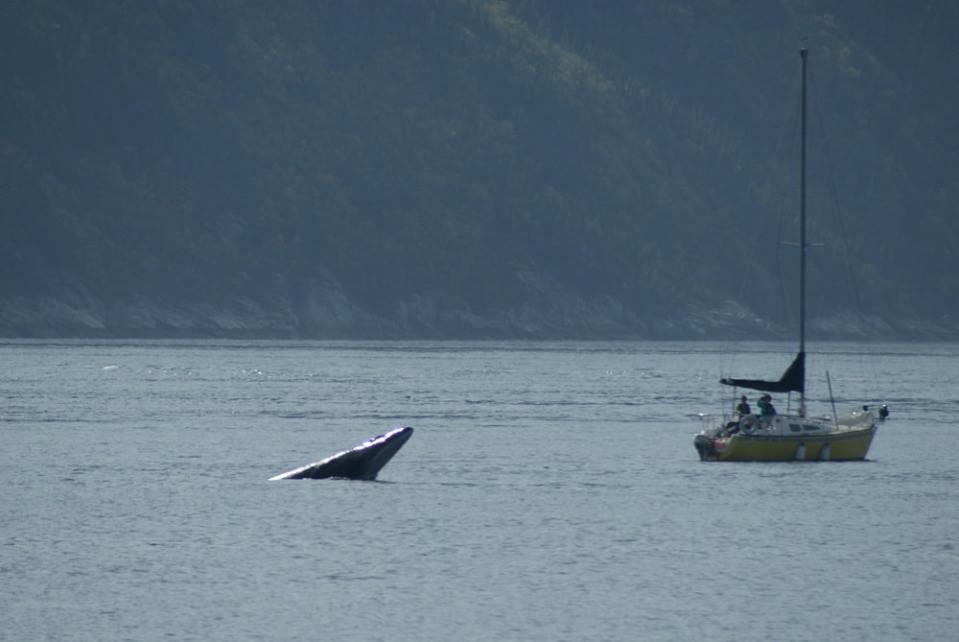 Observation des baleins Tadoussac