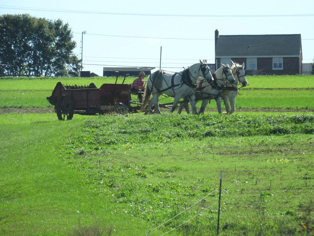 Une scène agricole semblant sortie d'un autre temps
