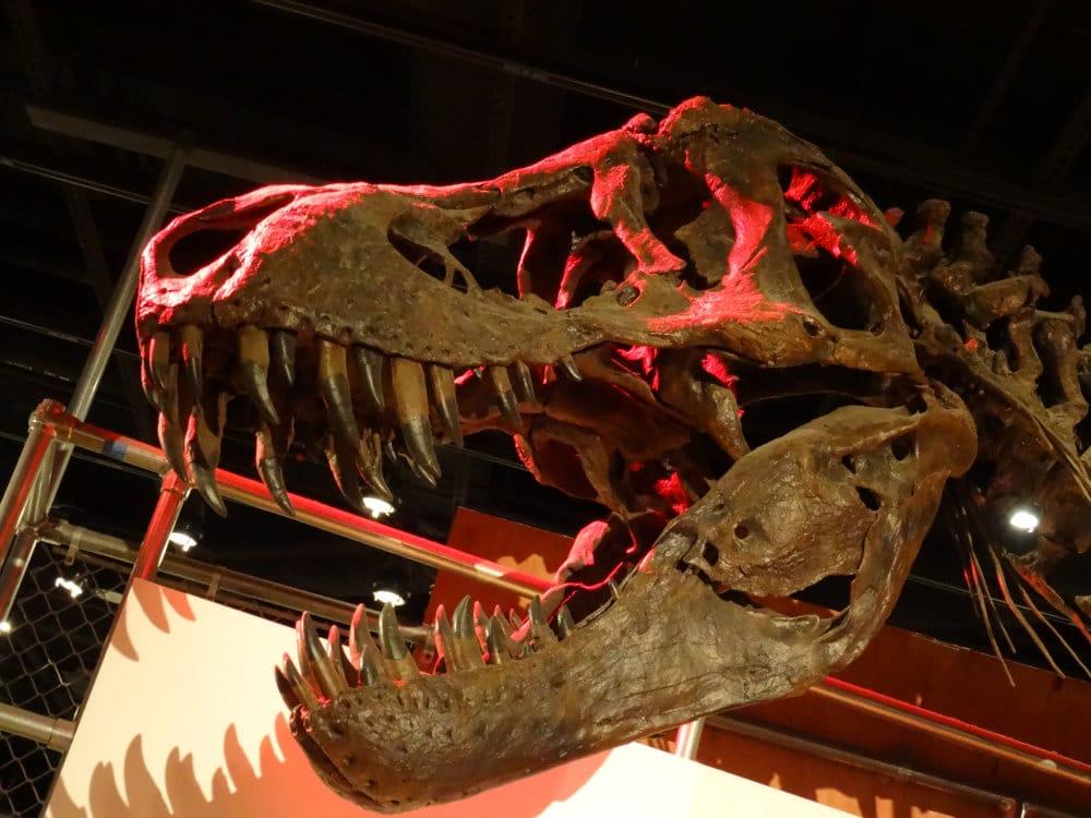 Le cruel T-Rex