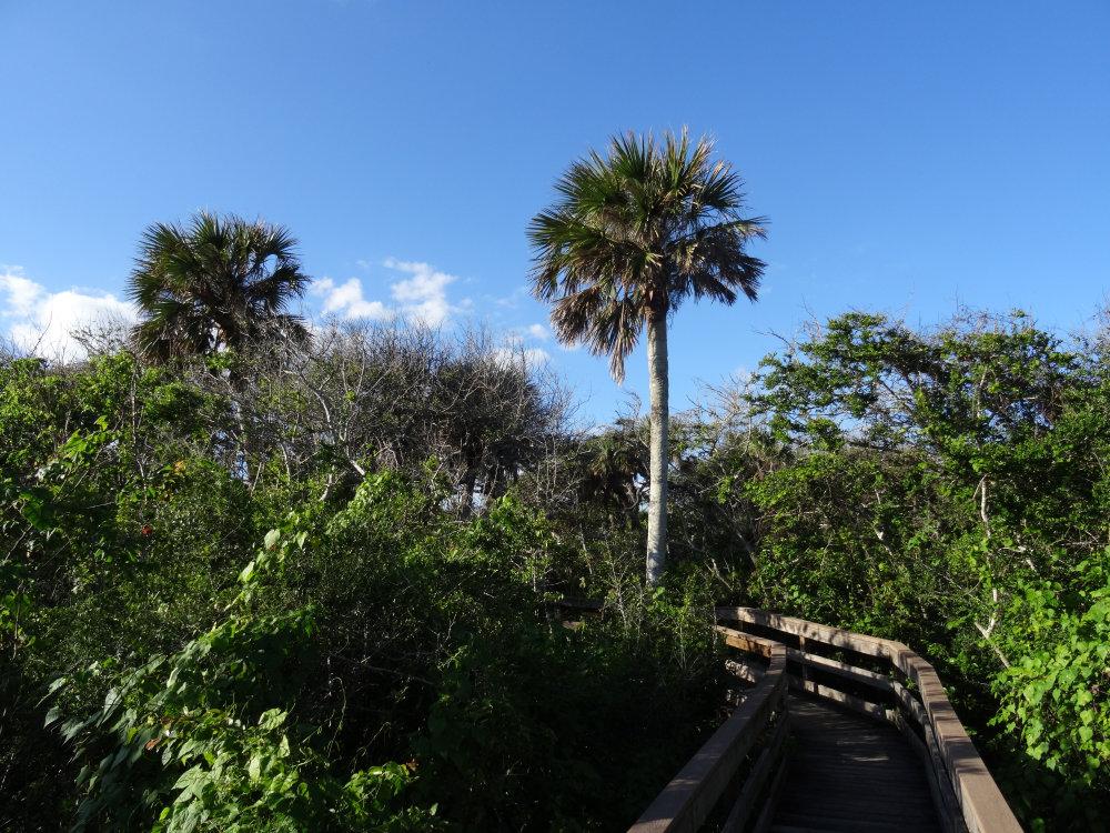 De nombreux chemins pour se balader au milieu du parc