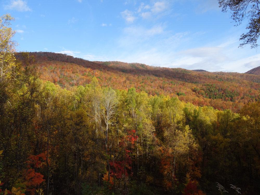 Des forêts aux teintes automnales