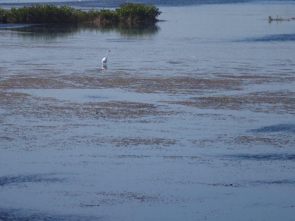 Une aigrette au milieu des flots